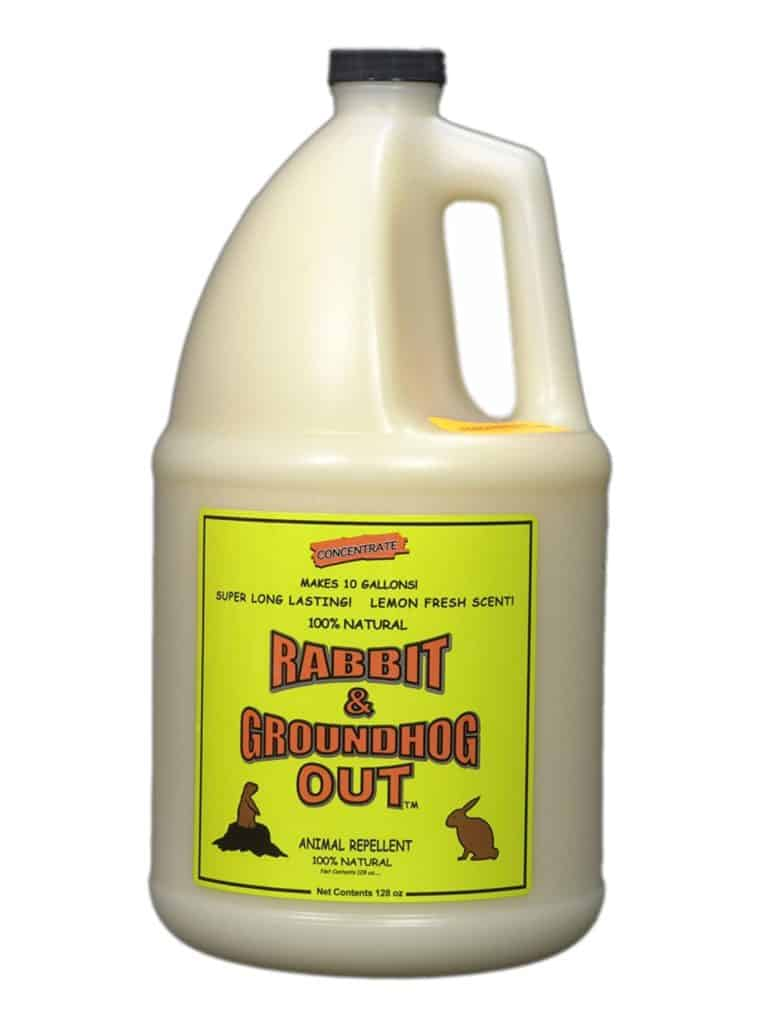 Rabbit & Groundhog Repellent: Rabbit Out 1 Gallon Concentrate