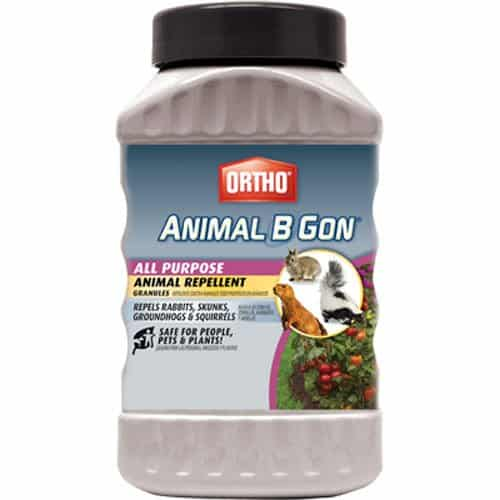 Ortho 489910 Animal B Gon All Purpose Animal Repellent Granules, 2-Pound (Squirrel, Groundhog, Rabbit and Other Small Herbivore Repellent)