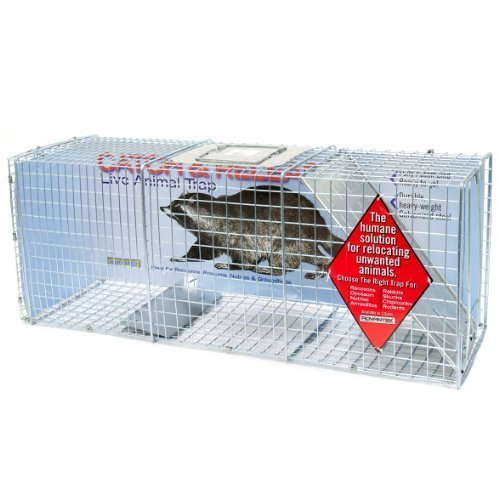 Advantek 20042B Catch and Release Live Animal Trap For Raccoons, 10 by 12 by 32-Inch