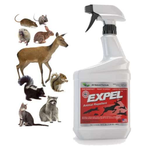Expel Natural Animal Repellent, Mice & Rodent Repellent - Ready to Use, Weatherproof - 32oz Easy Spray Bottle