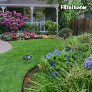 How To Deter Groundhogs From Eating Plants, How To Deter Groundhogs From Eating Plants