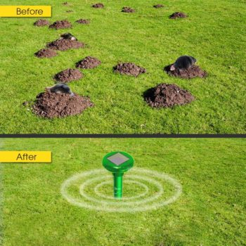 How To Deter Groundhogs From Garden, How To Deter Groundhogs From Garden