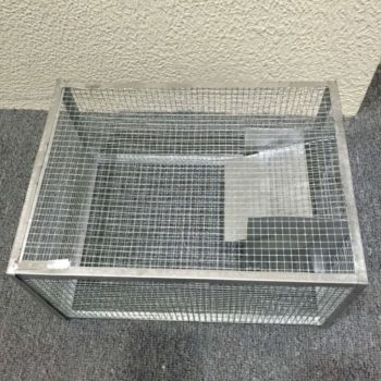Groundhog Trap, Groundhog Trap