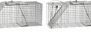 Havahart 1085 Easy Set One-Door Cage Trap for Raccoons, Stray Cats, Groundhogs, Opossums, and Armadillos (2-(Pack))